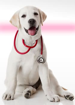 Dogtor Love im Interview